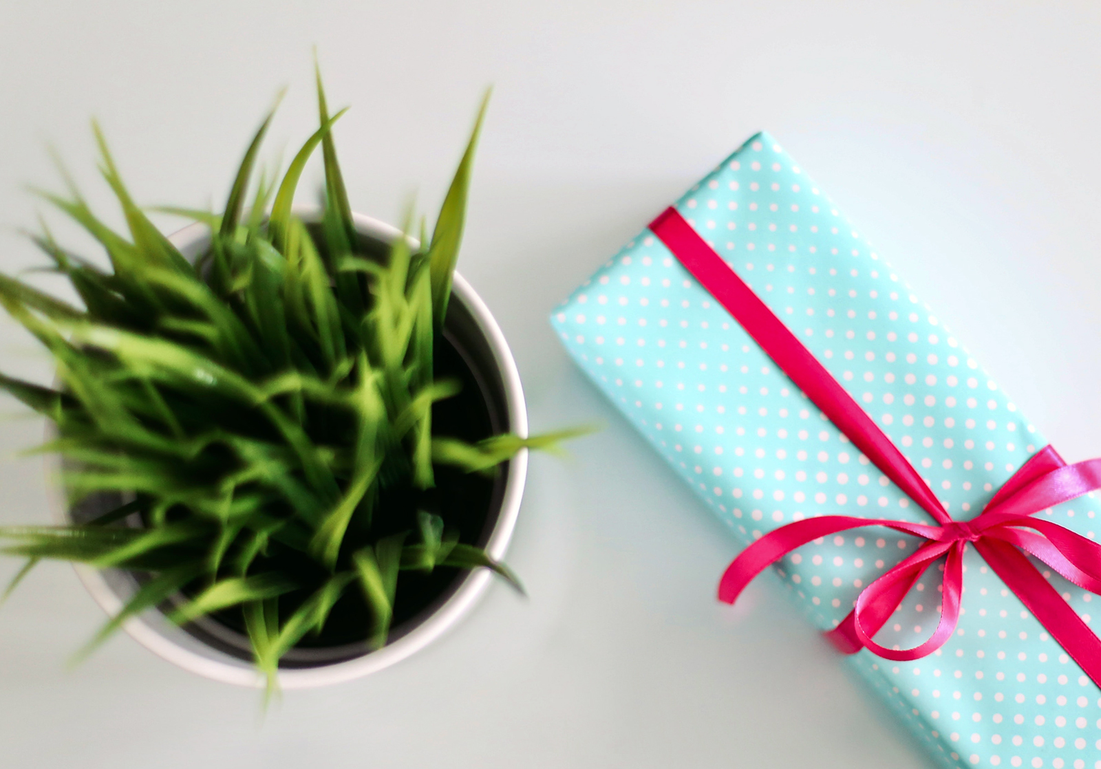customer referral program gift